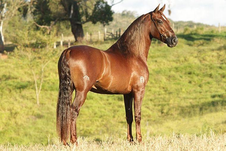cavalos-94centraldecoberturas-_gd-141934