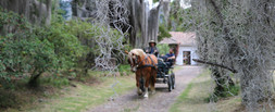 Carriage Driving Holiday COLOMBIA.JPG