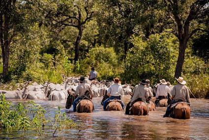 Pantanal Trail Ride Safari, Brazil