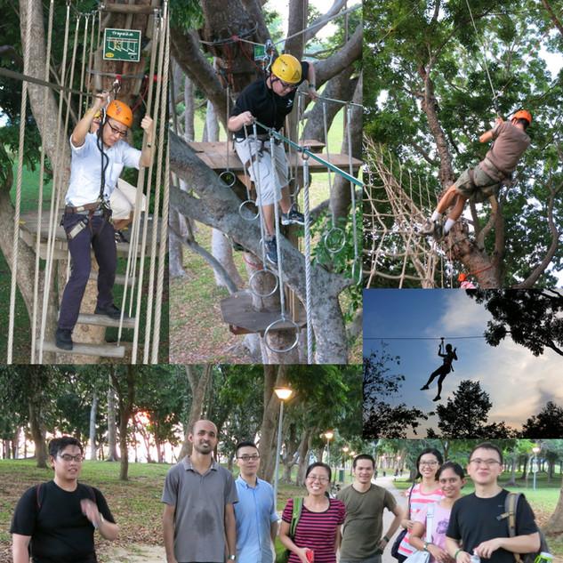 treetop3.jpg