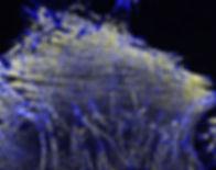 MBoC cover_RGB.jpg