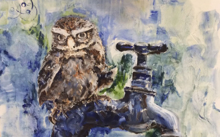 'Little Owl on tap  2017