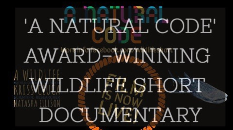 My latest film 'A natural code'