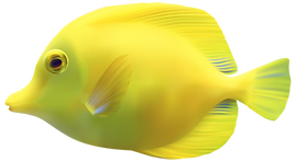 Yellow_ZebrasomaTang_Fish_PNG_Clipart-46