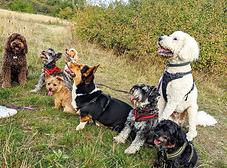 Dog-walkers-guild.png