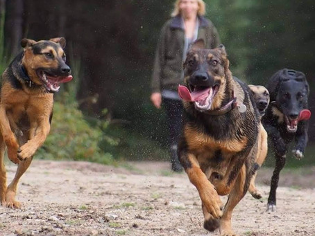 Only Dog Walkers Guild in the UK launched