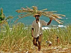 paysan-haitien.jpg