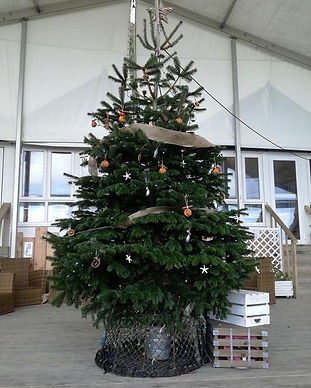 Prestige Christmas Trees. Real Christmas Trees for sale in Wadebridge & Newquay