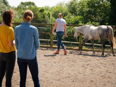 Emotional Intelligence & Leadership. Can horses really assist?