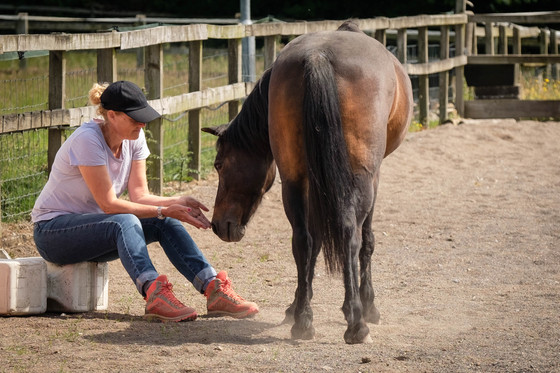 What do the horses do during a session?