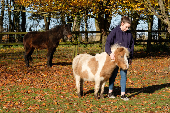 How does Equine Assisted Psychotherapy compare to other forms of therapy?