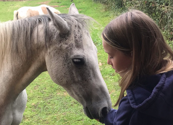 Have your parents suggested equine therapy?