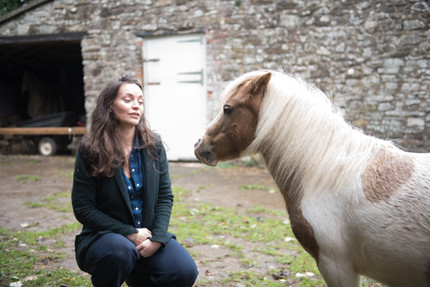 How can Equine Therapy help me get better?