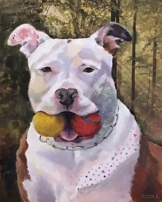 pit bull pet portrait 11 x 14 oil painting