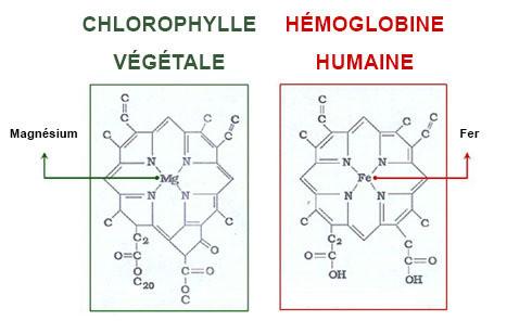 chlorophylle hemoglobine pharmacie des deux lions herboristerie paris