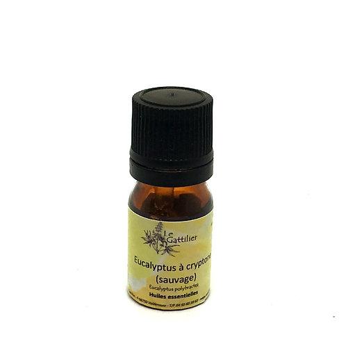 eucalyptus à cryptone sauvage huile essentielle bio paris pharmacie des deux lions