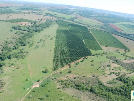 Senado: Acordo transfere mais de 4 milhões de terras da União para Roraima