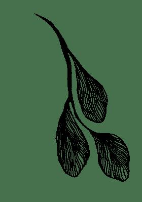 Vector-5 (1).png