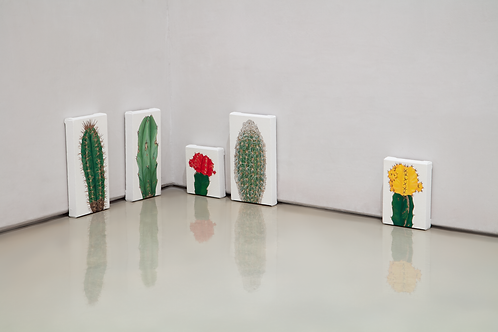 Cactus paintings