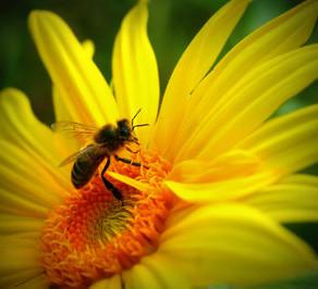 Créer de la Biodiversité dans votre jardin !