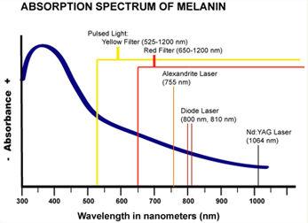 Absorption specta of melanin.JPG