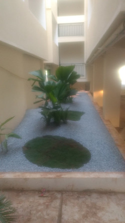 Dry garden with green oases