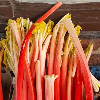 Rhubarb in season