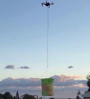 BalloonsMP_LowRes.jpg