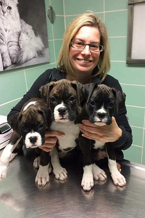 4 Pack Puppy Socialization Daycare