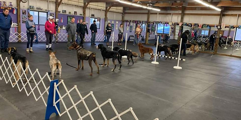 Open Floor Obedience Training