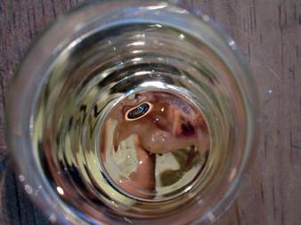 《玻璃杯》2005