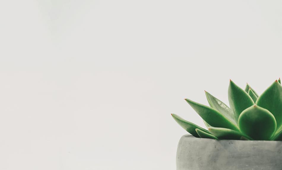 botanical-cactus-close-up-305821.png