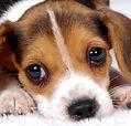 cachorro-foto-de-divulgação.jpg