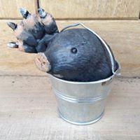 Bucket Mole