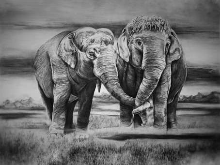 """""""Elephants"""" Progress Drawing Blog - Story behind the Commission"""