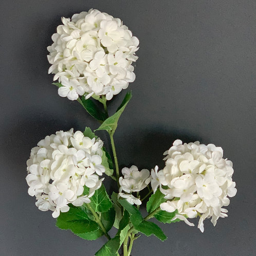 WHITE SNOWBALL VIBURNUM STEM