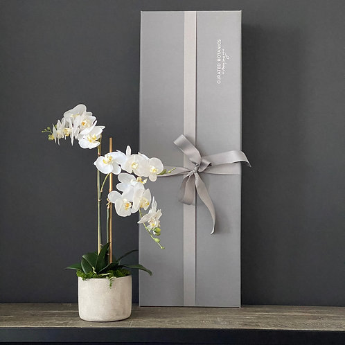 'POTTED PHALIES' 3-HEAD FAUX MOTH ORCHID (BOXED)