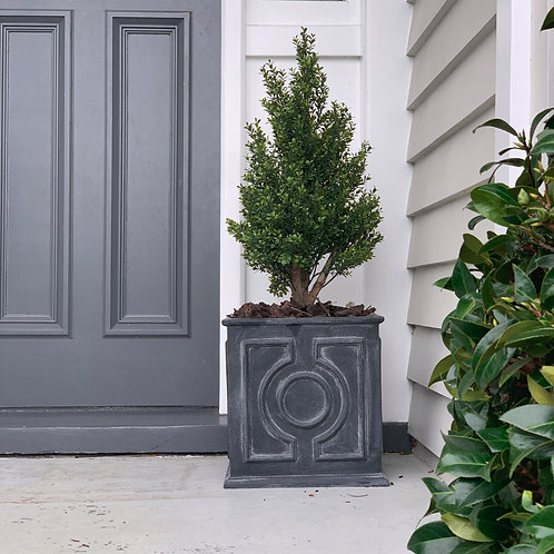 BUXUS CONICAL SQUARE PLANTER