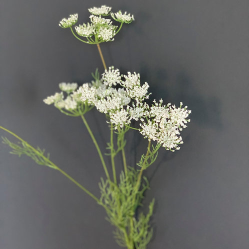 WHITE QUEEN ANNE'S LACE SPRAY