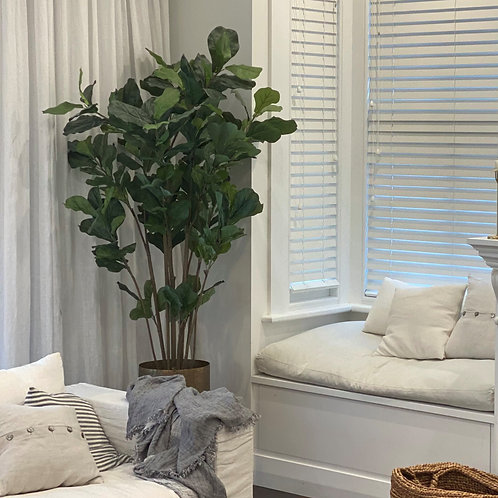 GRAND FIDDLE-LEAF FIG TREE IN BRASS PLANTER
