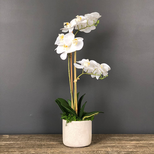 'POTTED PHALIES' 2-STEM FAUX MOTH ORCHID (BOXED)