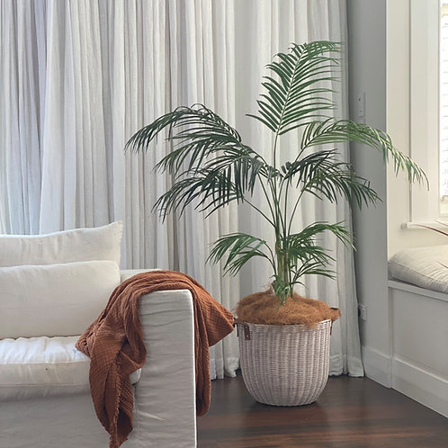 'KENTIA & RATTAN' INDOOR PLANT & BASKET