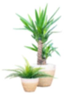 Kisimbo-Planters.jpg