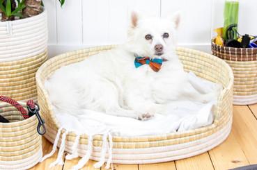 Dog Bed (medium)