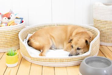 DOG BED (large)