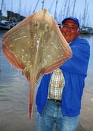 Bill Cassar  small-eyed ray