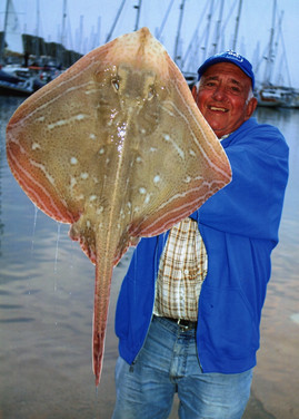 Bill Cassar  small-eyed ray