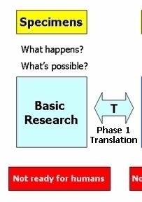 Basic Science and T1 Translation
