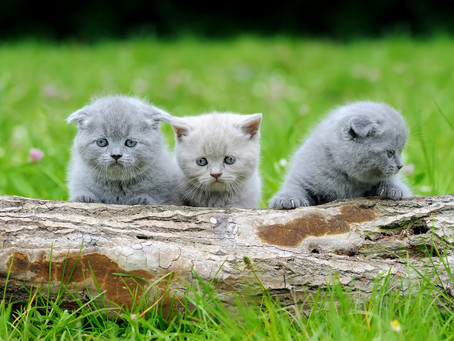 What Is Kitten Season and How Can You Help?