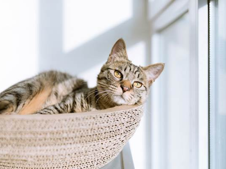 Looking After a Senior Cat - Top 10 Tips